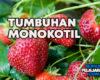 Pengertian Tumbuhan Monokotil, Ciri, Jenis dan Contohnya