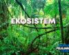 Pengertian Ekosistem, Komponen, Macam dan Contohnya